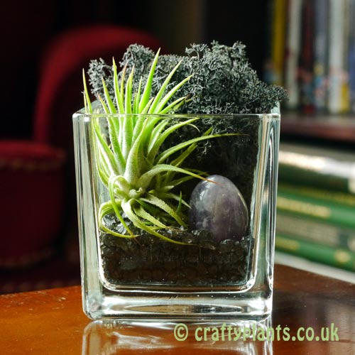 Elements Airplant Kit - AETHER by craftyplants