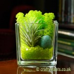 Elements Airplant Kit - EARTH by craftyplants