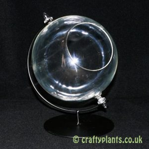 15cm glass globe on stand by craftyplants