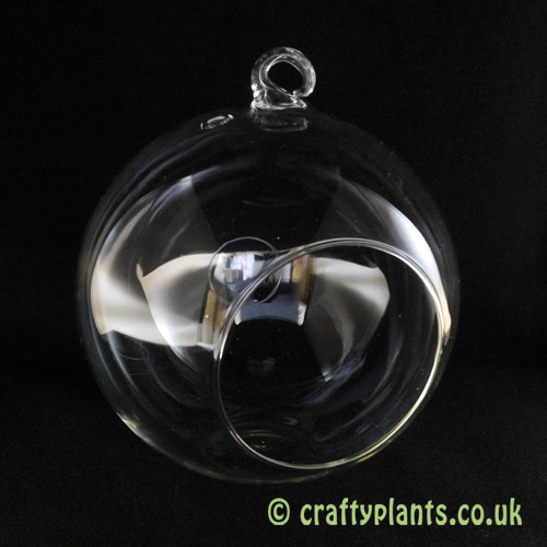 15cm glass ball terrarium by craftyplants.co.uk