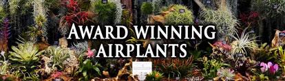 Award Winning Air Plants Mobile Banner Craftyplants