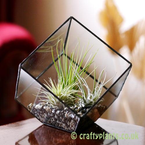15cm geometric terrarium display idea by craftyplants.co.uk