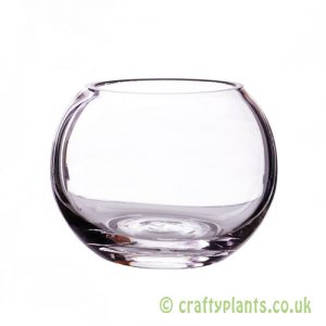 10cm glass fishbowl from craftyplants