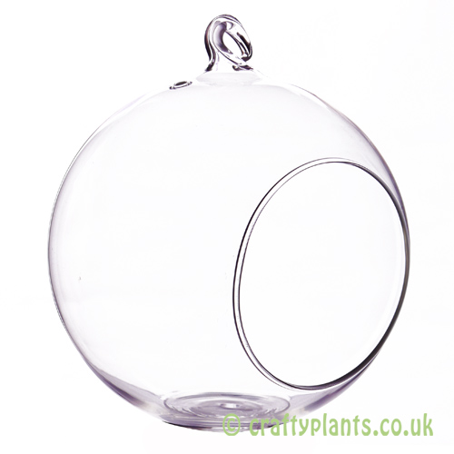 15cm glass ball terrarium from craftyplants