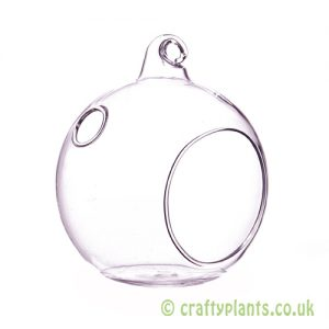 An 8cm glass ball terrarium from craftyplants