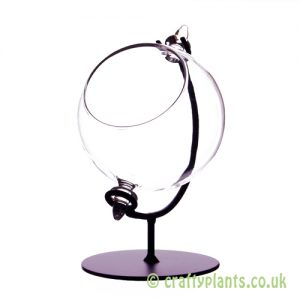 8cm glass globe terrarium with stand by craftyplants